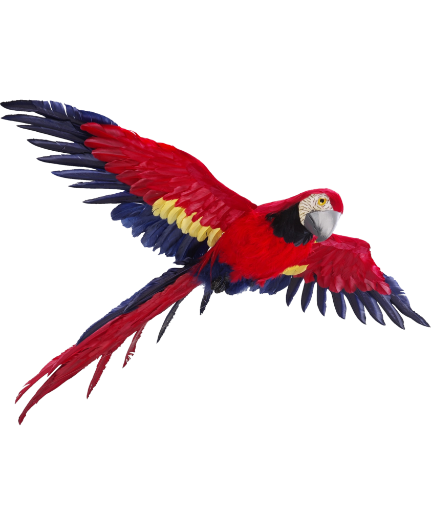 Flying vector parrot. Png photos peoplepng com