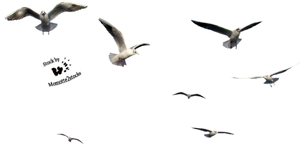 Bird file peoplepng com. Flying seagull png png transparent stock