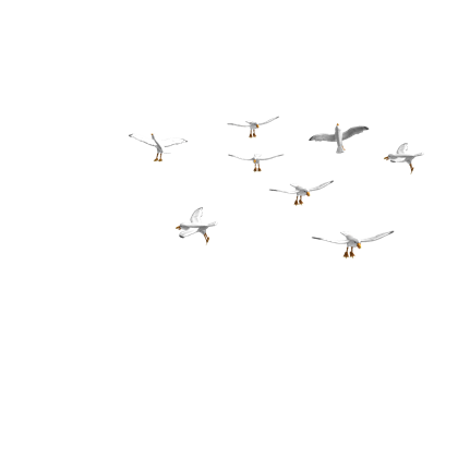 Image flock of attack. Flying seagull png freeuse library