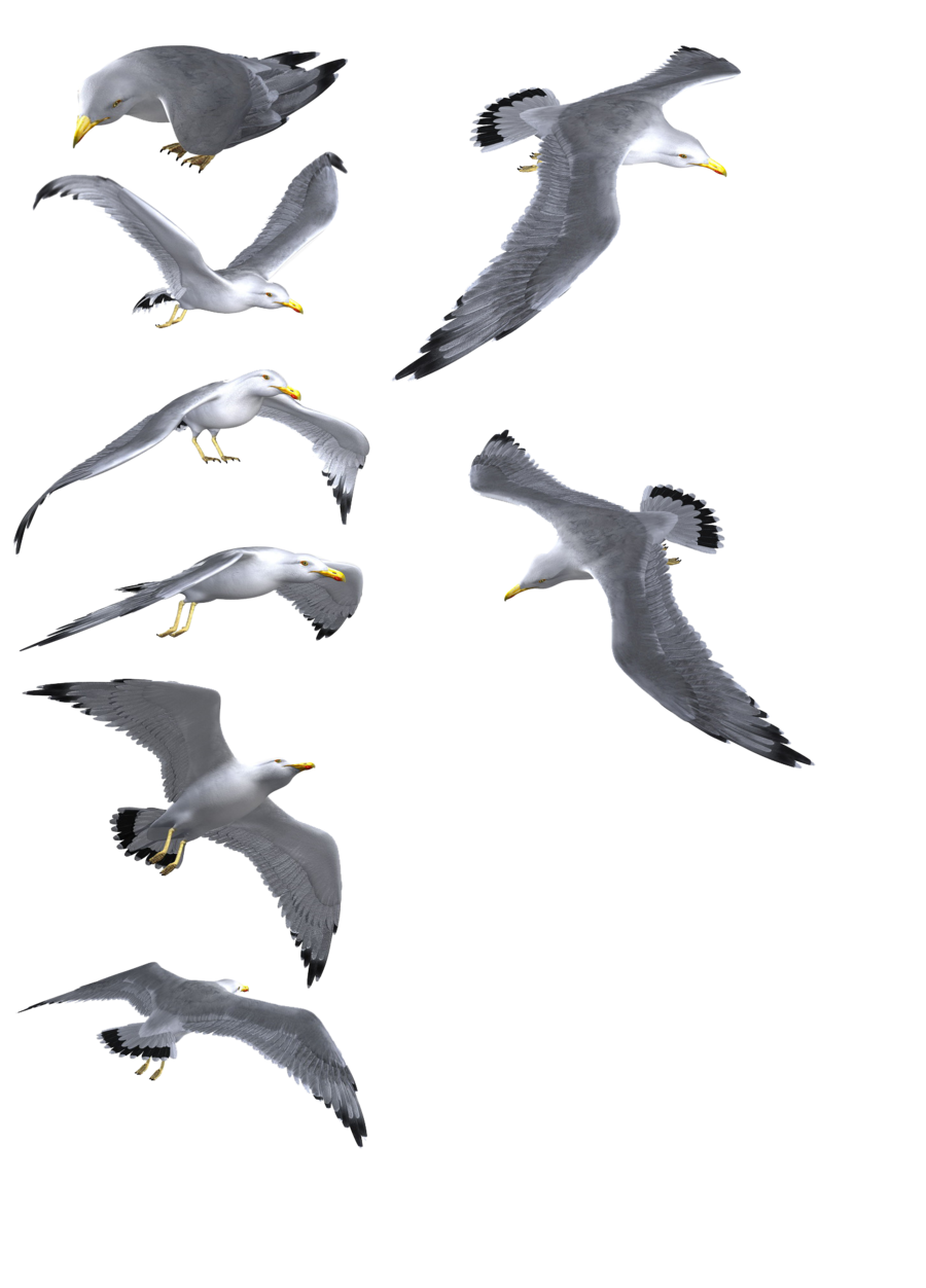Crazywidow info. Flying seagull png image library stock