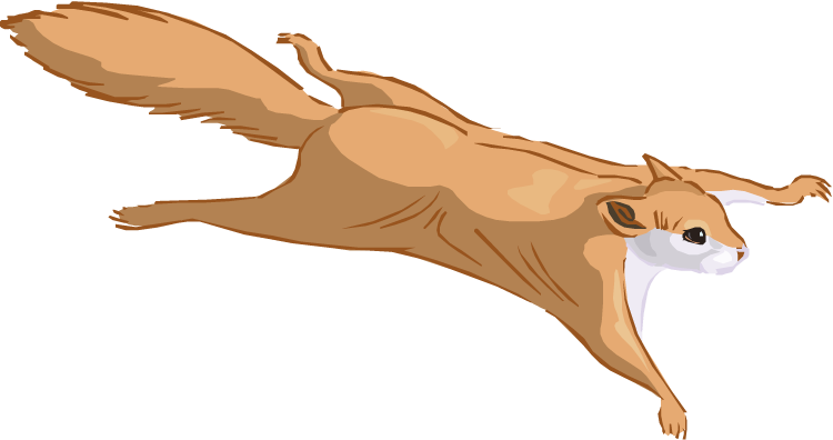 Flying squirrel png. Clipart