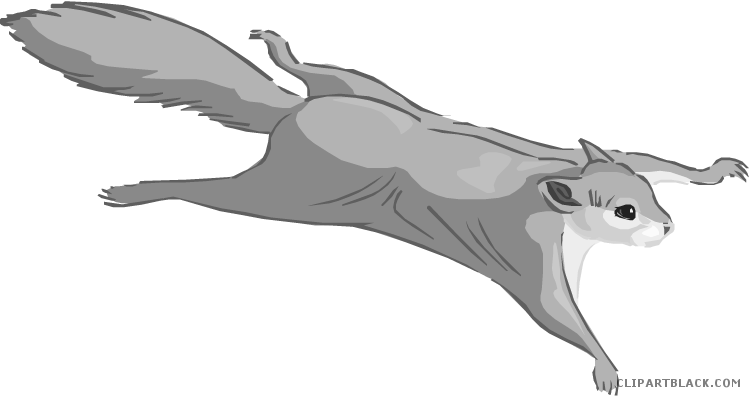 Flying squirrel png. Animal free black white