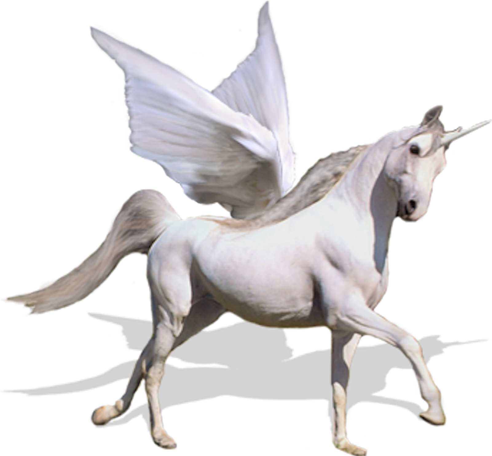 Flying unicorn png. Psd horse images free