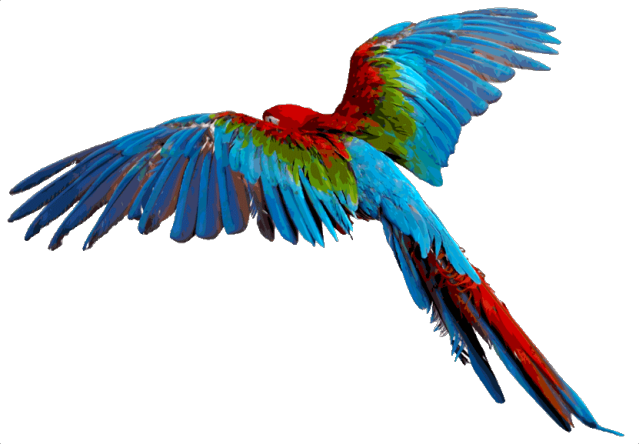 Flying vector macaw. In flight projects to