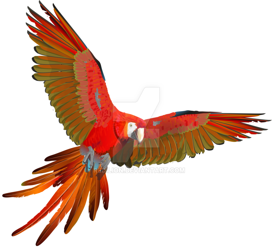 Flying vector parrot. Ara macao by redilion