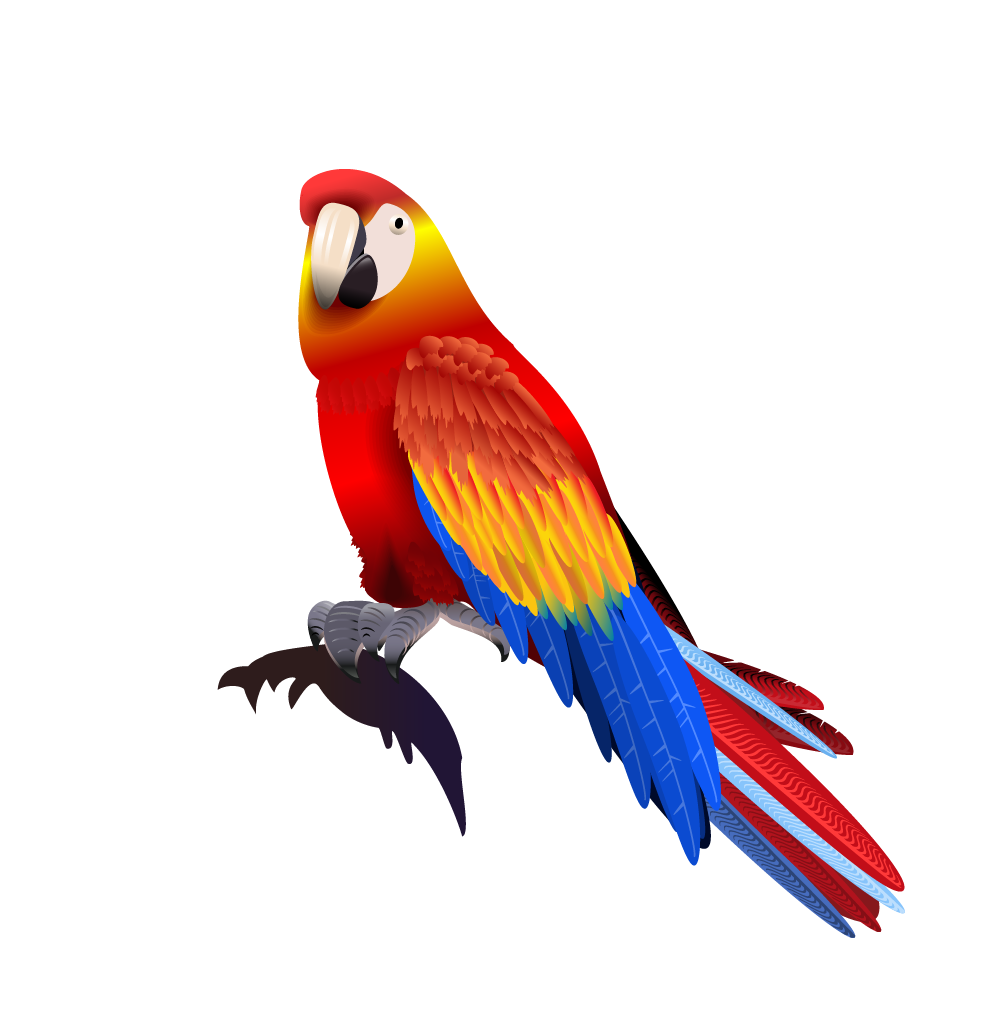 Flying vector parrot. Macaw transprent png free