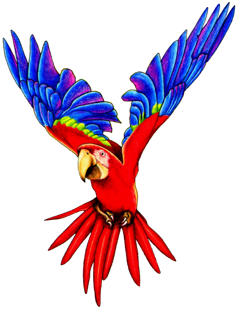 Flying vector parrot. Png pic peoplepng com