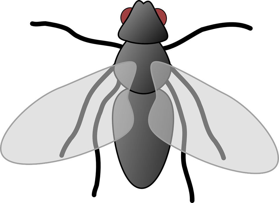 Vector insects animated. Collection of free flies