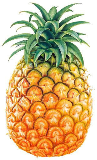 food clipart pineapple