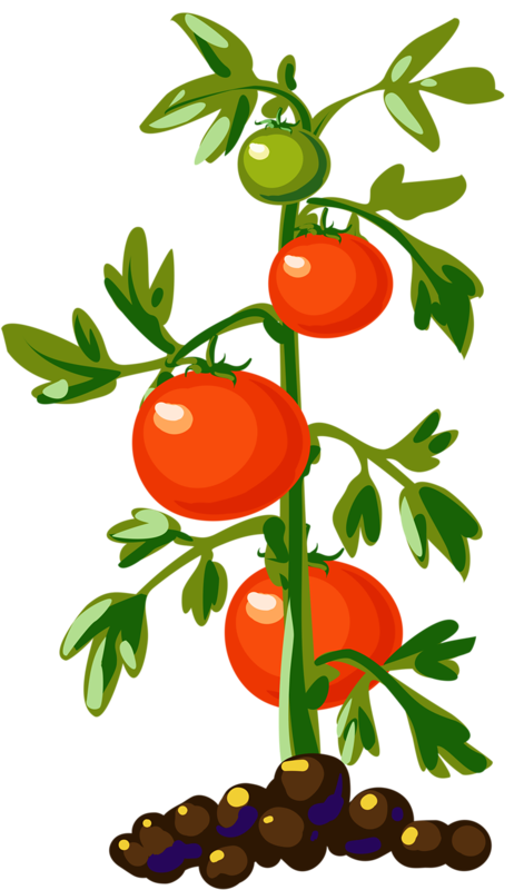 food clipart plant