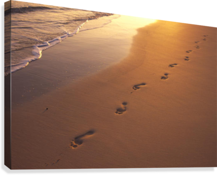 Footprints in the sand png. At sunset shoreline water