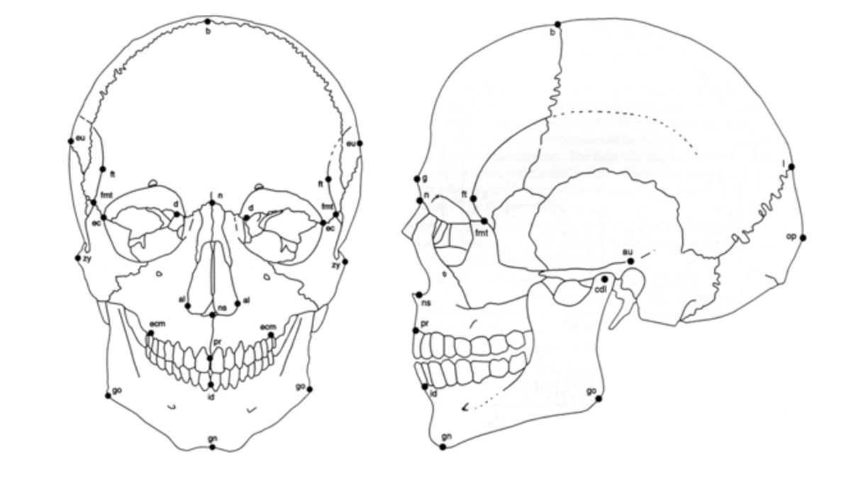 Forensic drawing anthropological. Ancestry race and anthropology
