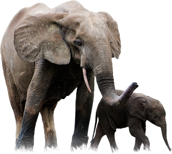 Forest animals png. Elephants images free download