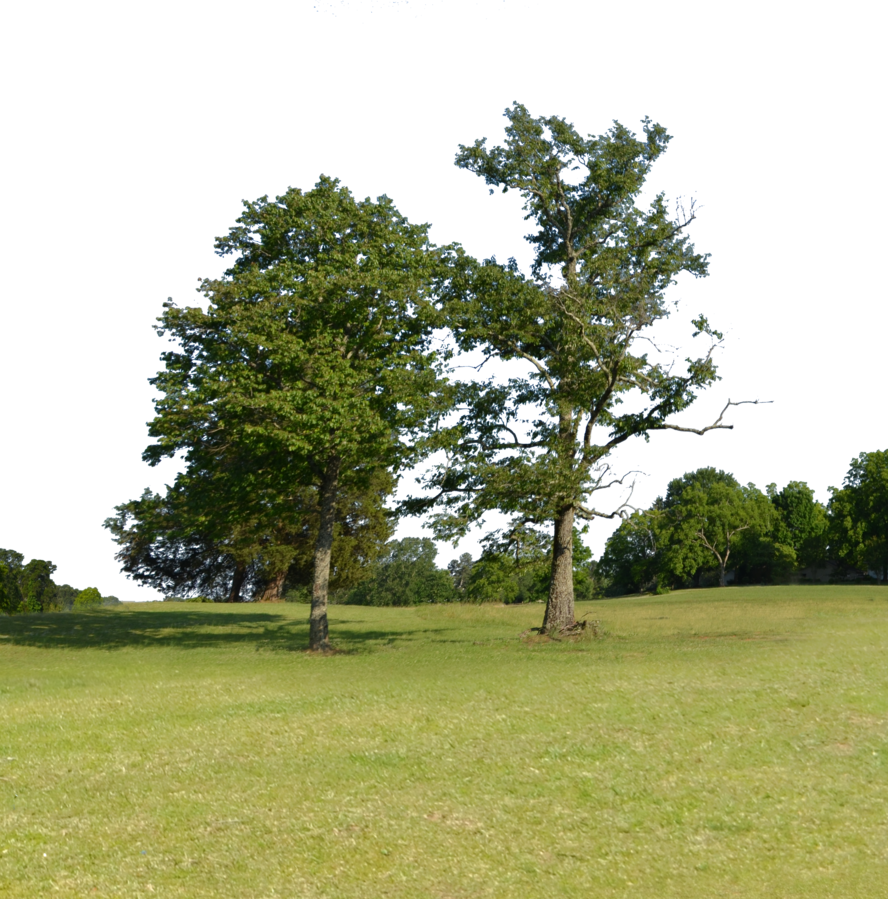 Park trees png. On hill forest background
