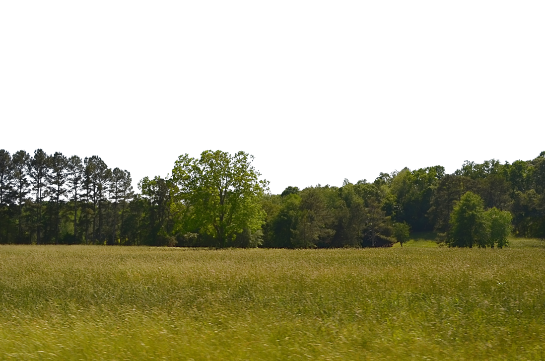 Png forest. Tree field background stock