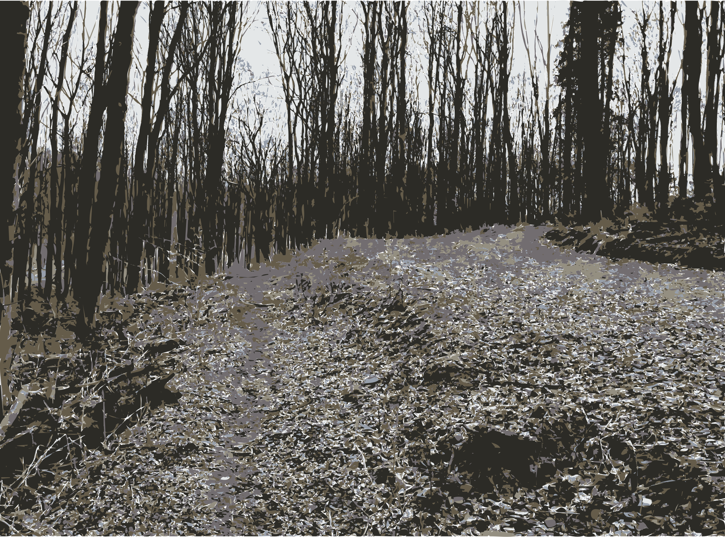 Photo s from lichtscheid. Forest clipart beautiful forest clip black and white download