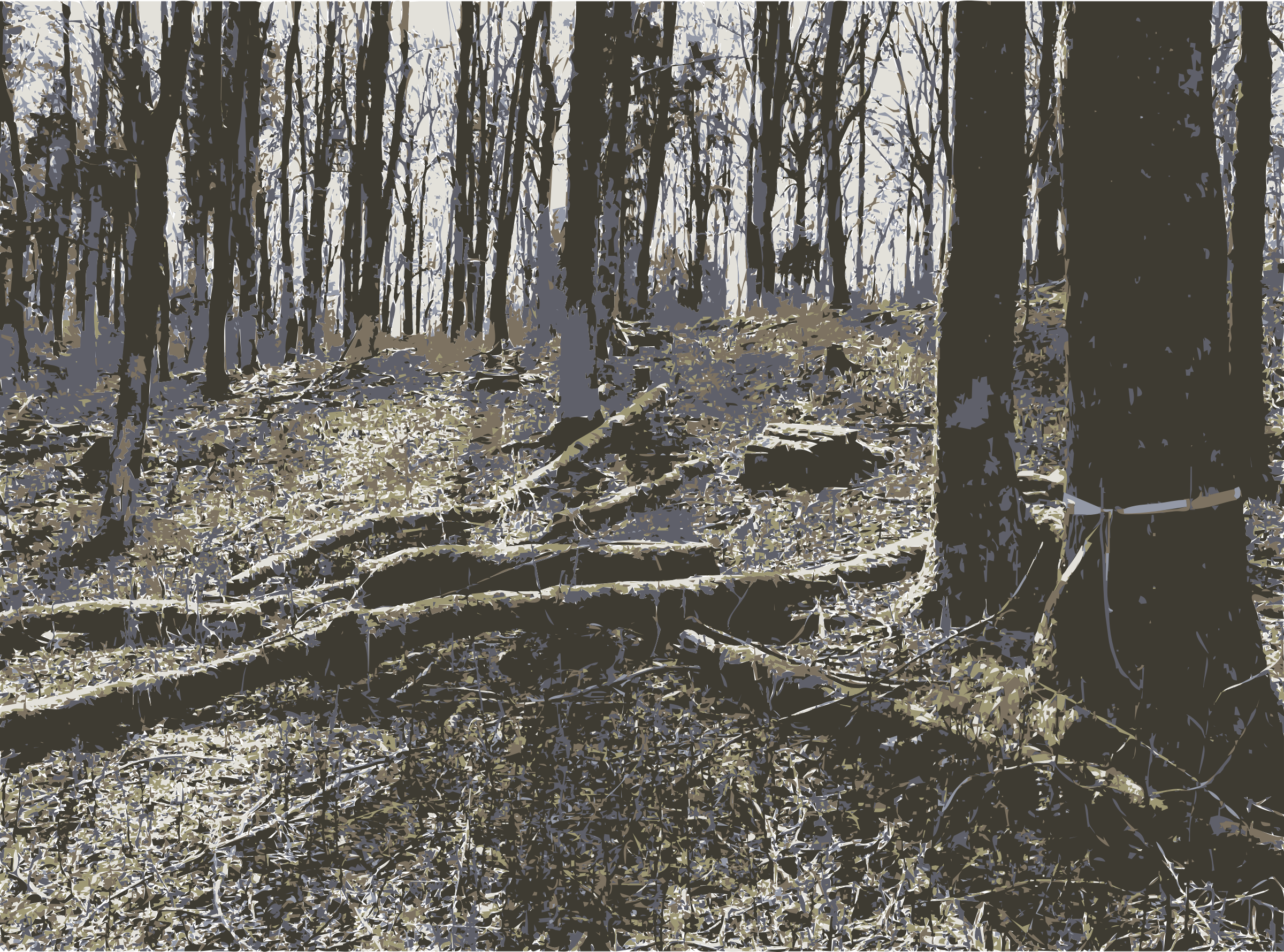 Photo s from lichtscheid. Forest clipart beautiful forest picture black and white download