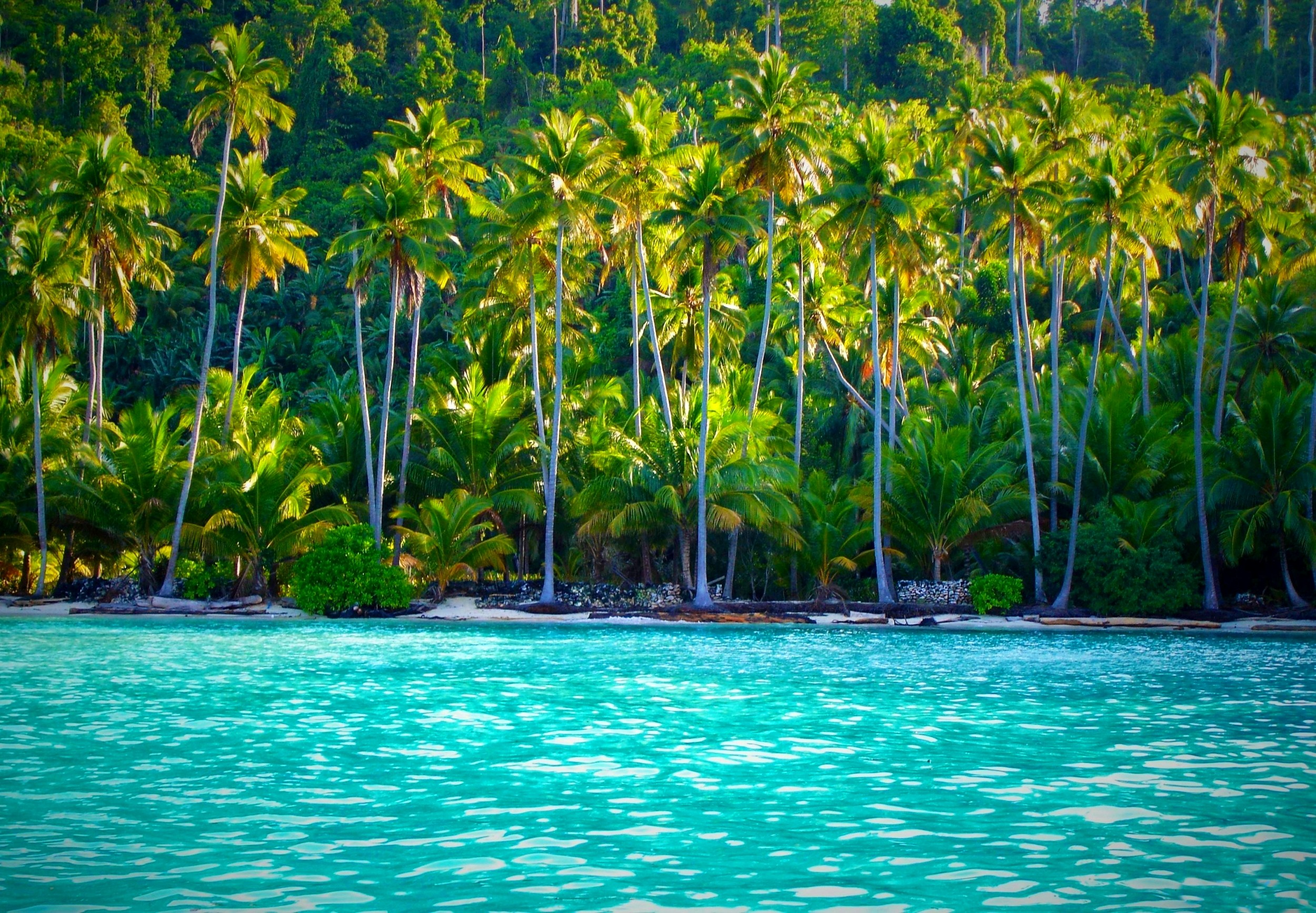 Beach islands togian indonesia. Forest clipart beautiful forest vector stock