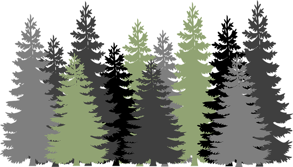 Evergreen tree clip arts. Forest clipart cave in clip black and white
