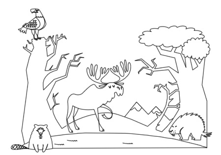 Forest Habitat | Forest coloring pages, Coloring pages, Animal ... | 315x450