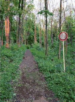 Forest clipart forest path. Sculpture garden computer icons