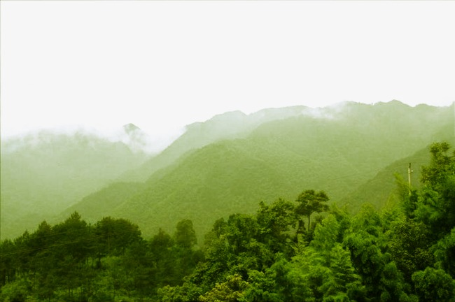 Forest clipart mountains. Web page aoyama png