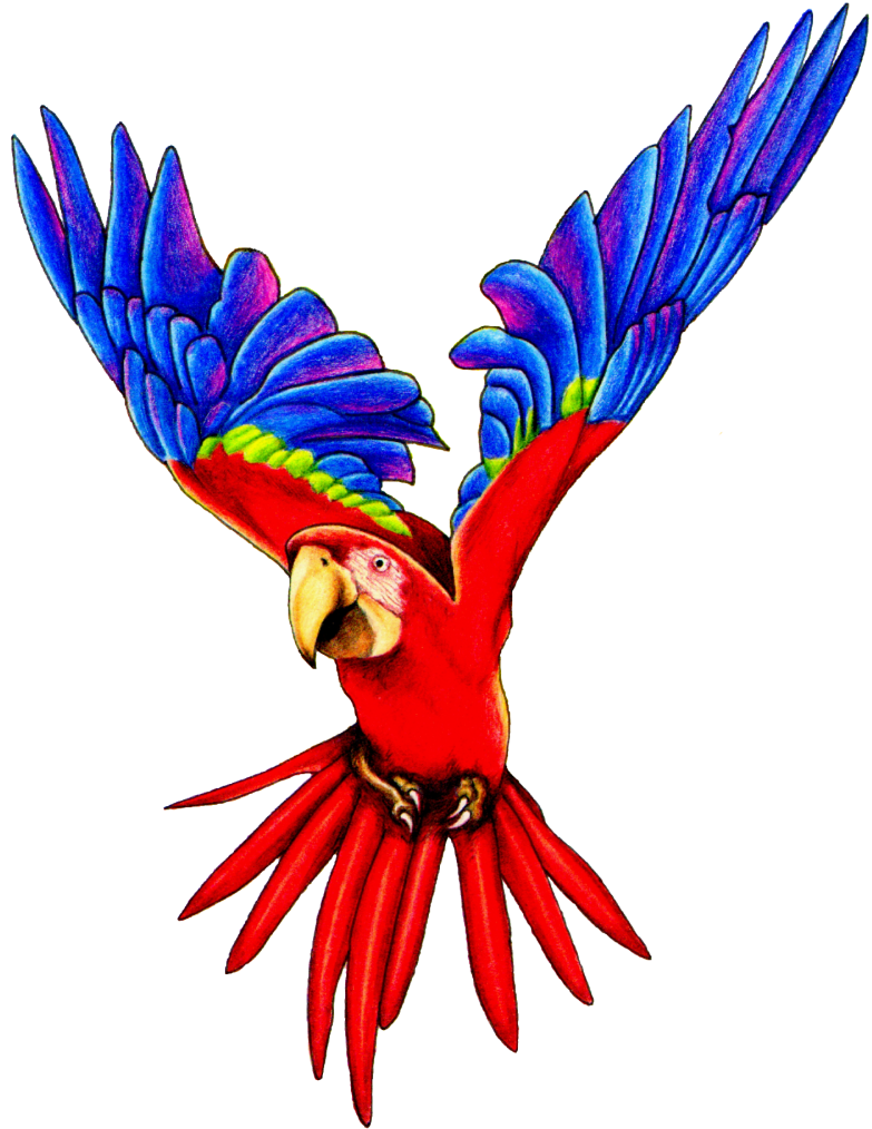 Forest clipart parrot. Macaw clip art flying