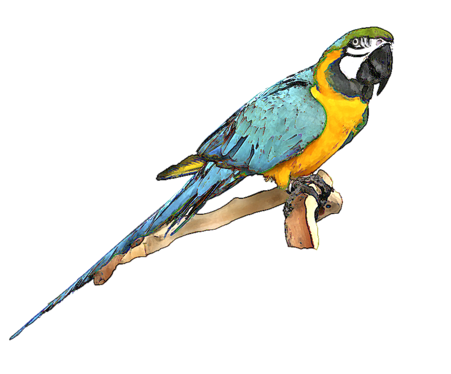 Forest clipart parrot. Free bluebird download clip