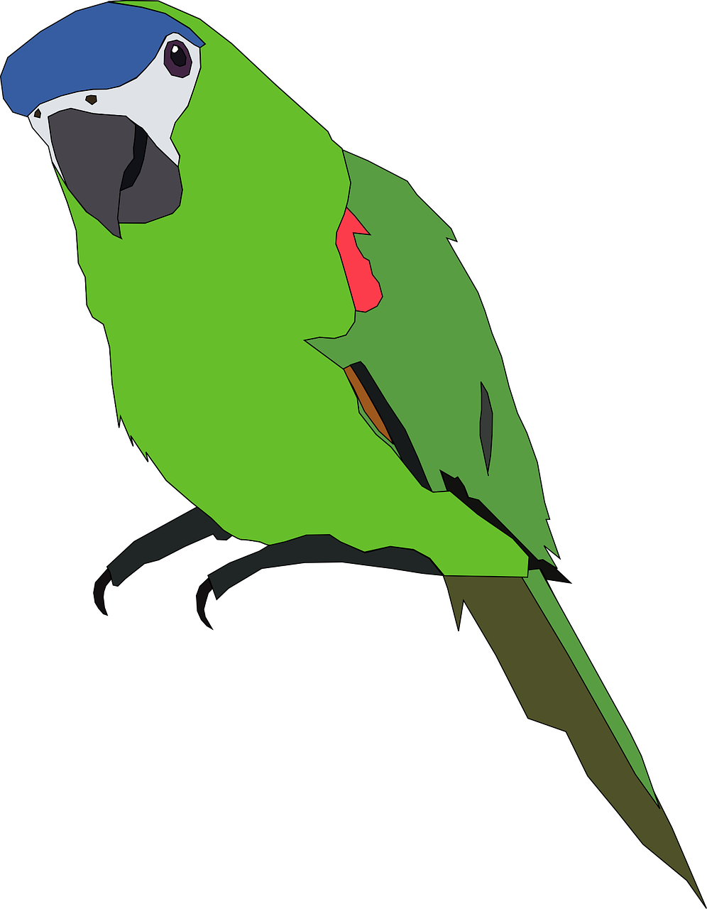 Forest clipart parrot. Free image on pixabay