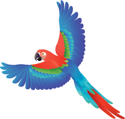 Forest clipart parrot. Rain at getdrawings com