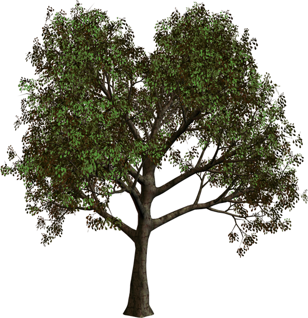 Forest clipart png. Tree gallery yopriceville high