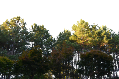Forest png. Download free transparent image