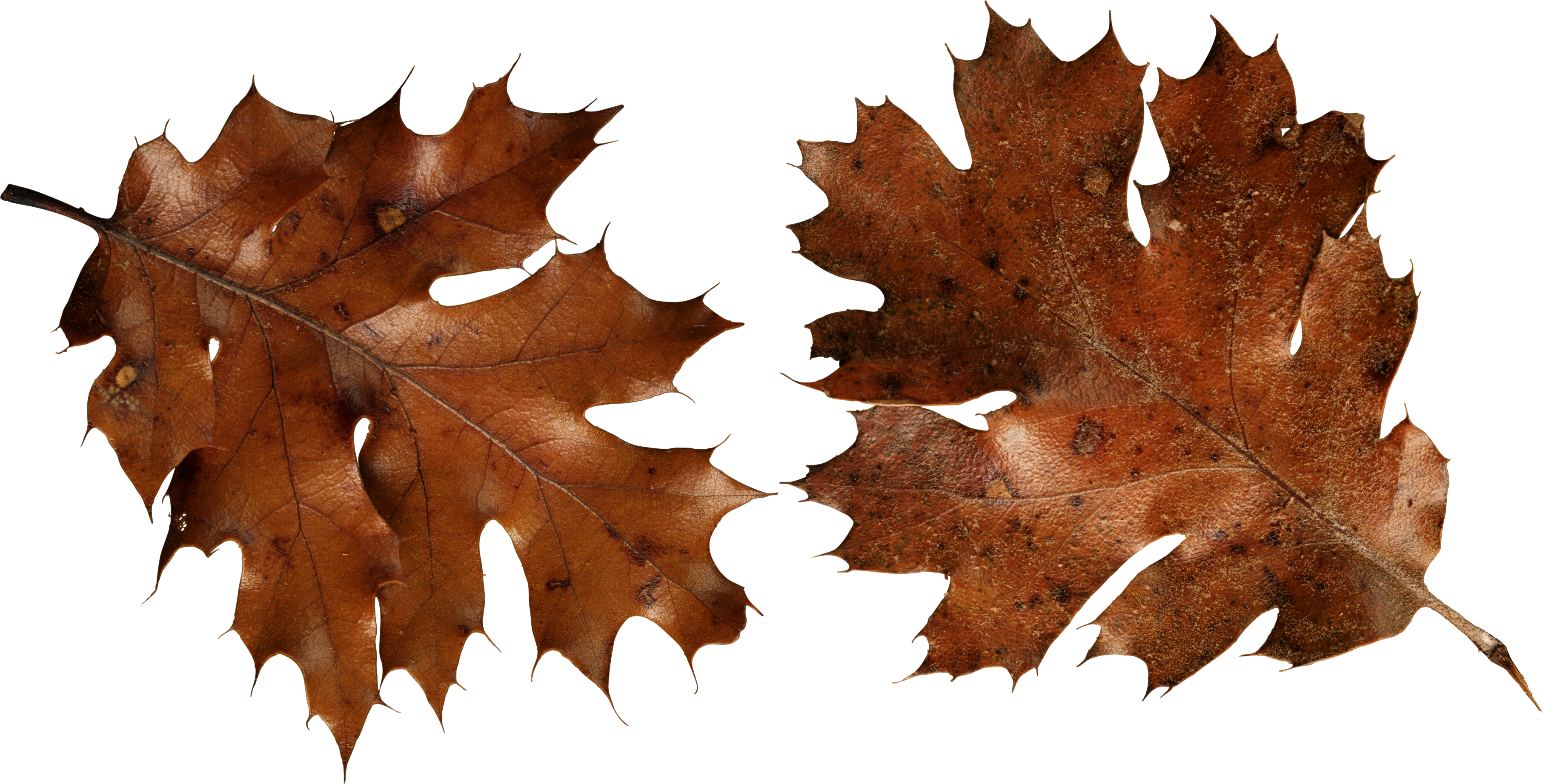 Forest floor foliage png. Autumn leaves images free