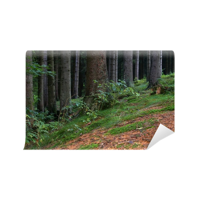 Forest floor png. The wall mural pixers