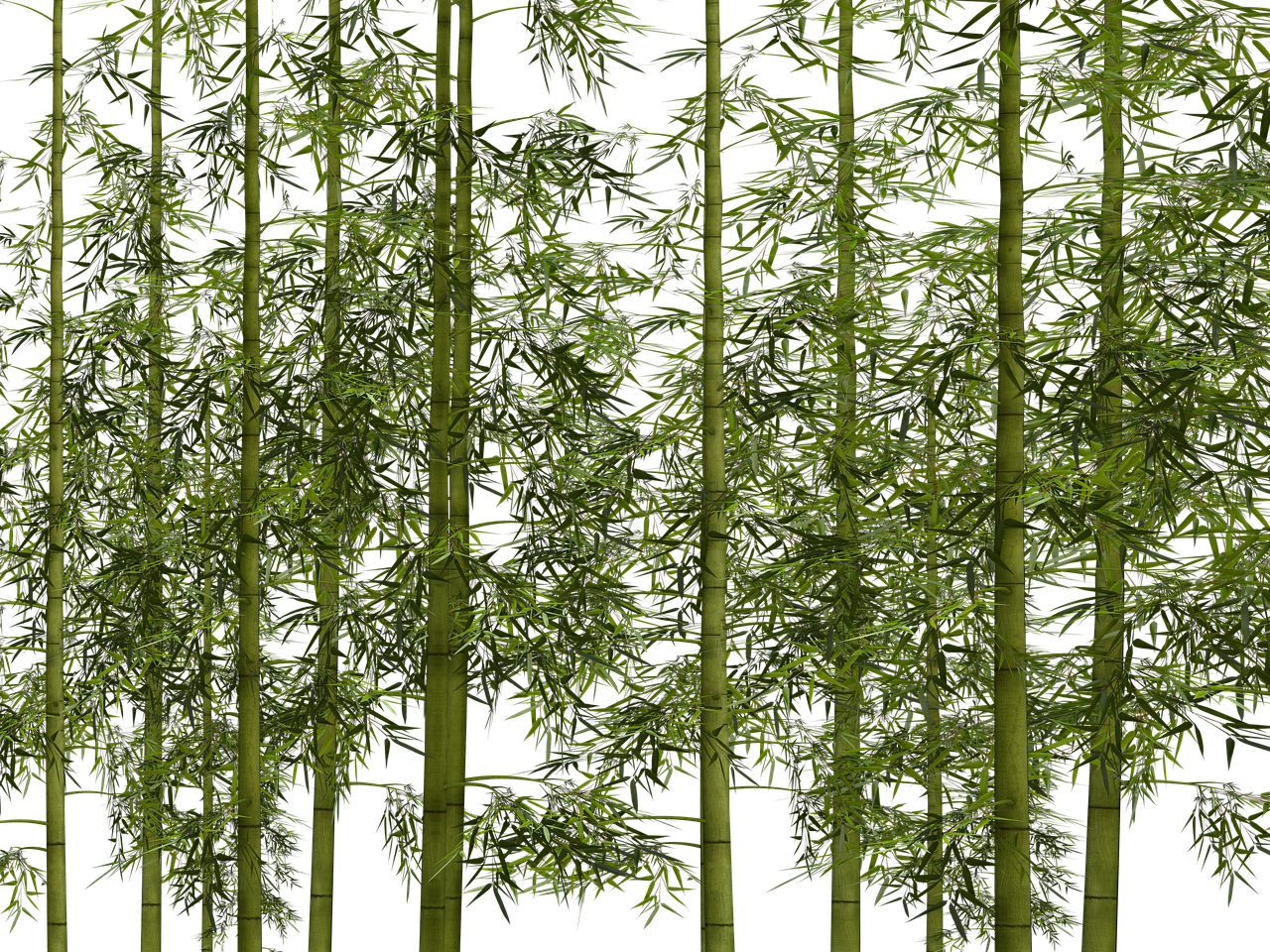 Forest floor png. Choosing bamboo flooring scandimummy