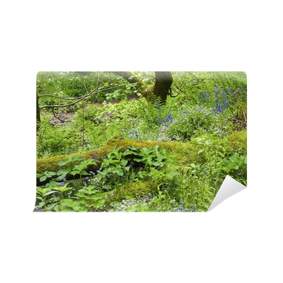Forest floor png. Wall mural pixers we