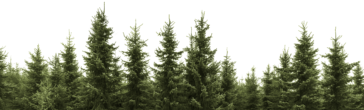 Image stock photo row. Forest pine trees png image library library
