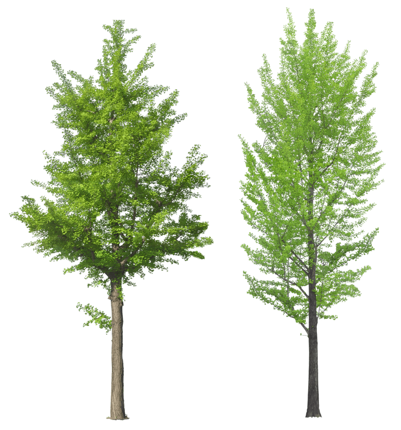 Forest pine trees png. Download free tree image
