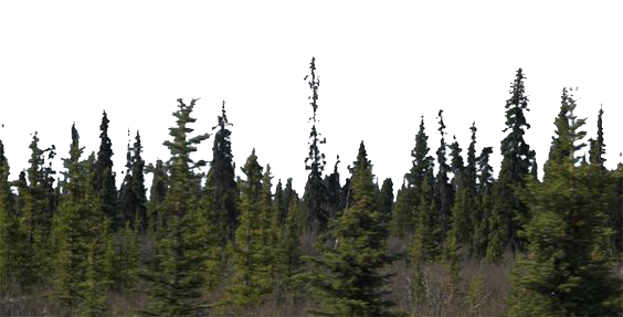 Forest png. Mart