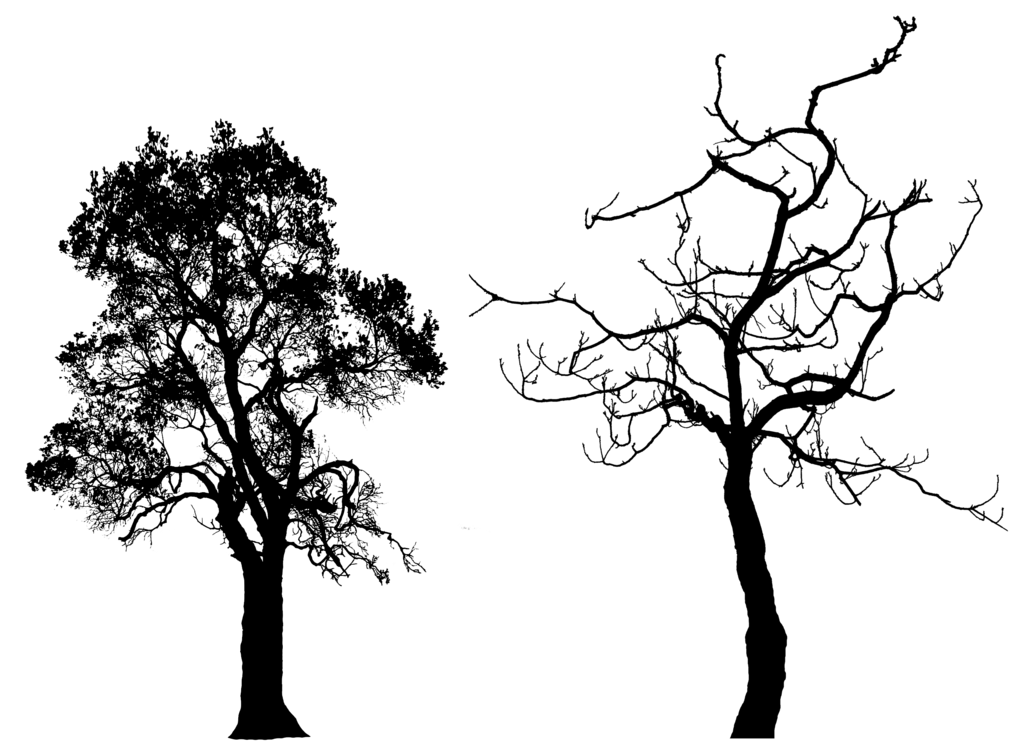 Bark drawing oak tree. Silhouette pack hb by