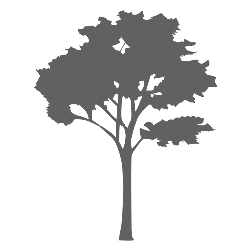 Vector wind tree. Maple silhouette transparent png