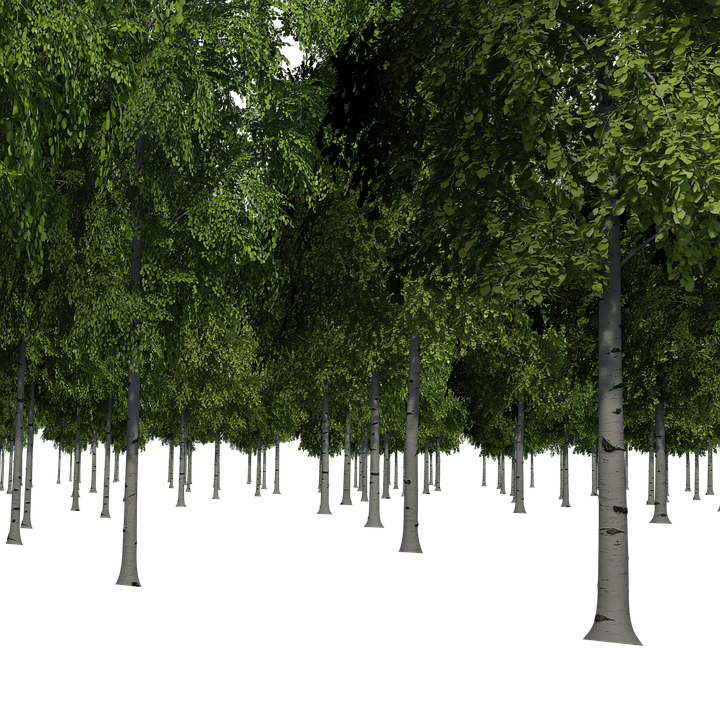 Tree image . Forest trees png banner stock