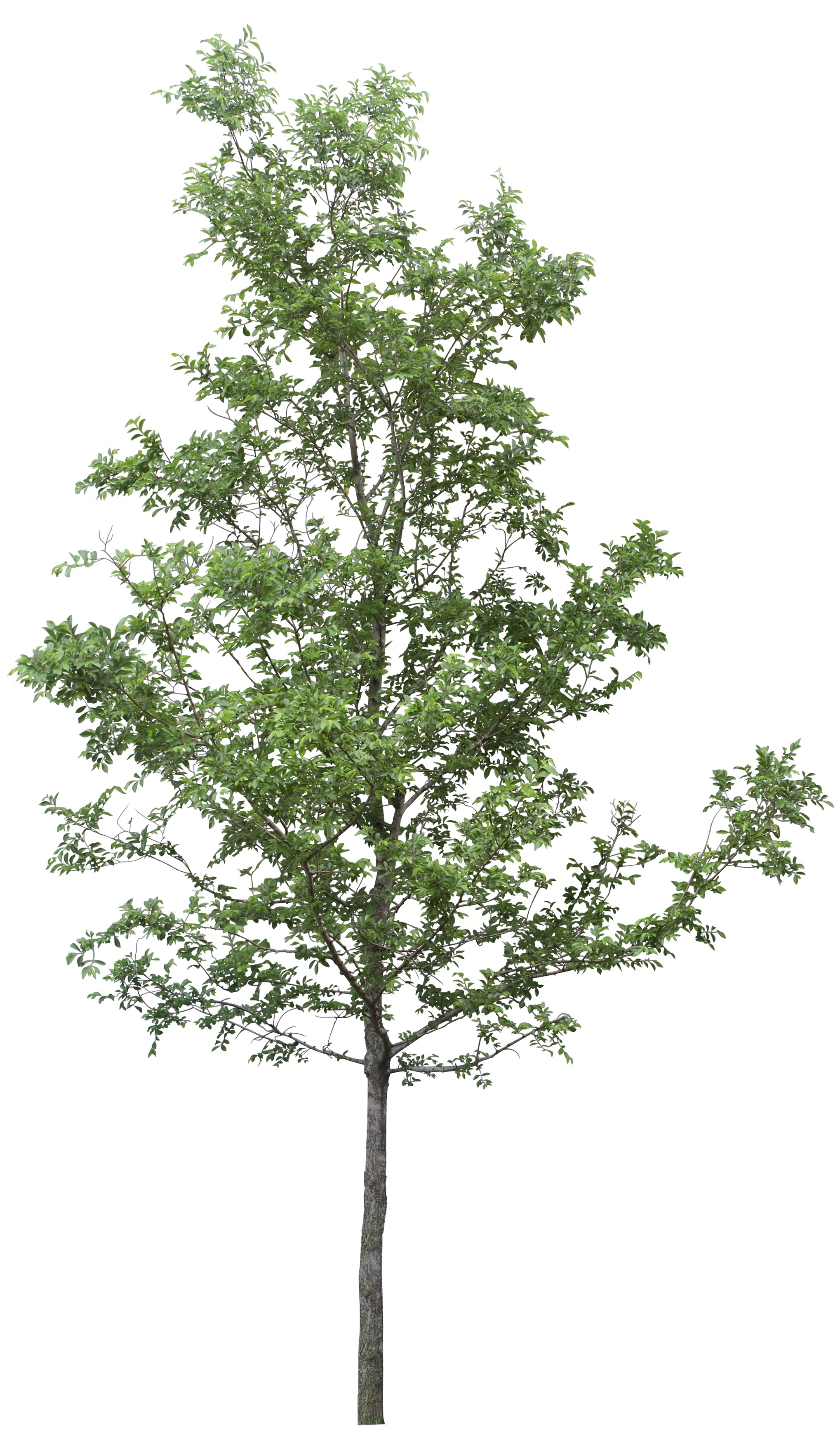 Tree image planting templates. Forest trees png svg royalty free library
