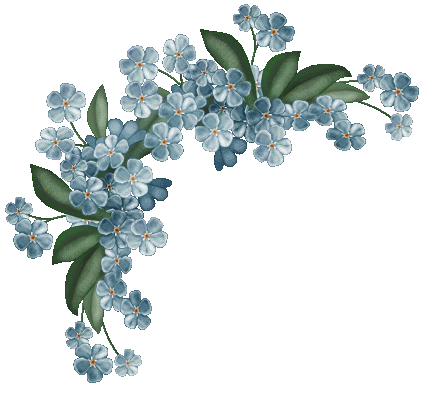 forget me not flower png