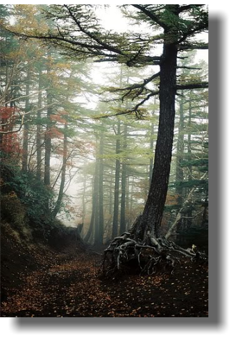Forrest drawing foggy forest. The aokigahara is a