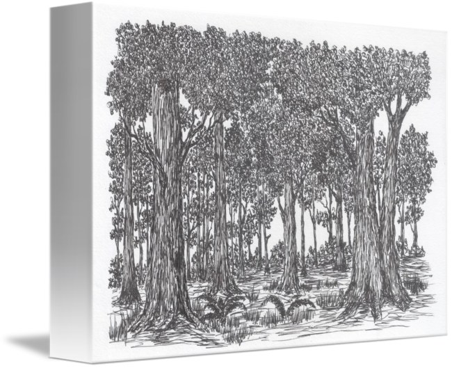 Forrest drawing pen. Dark forest by
