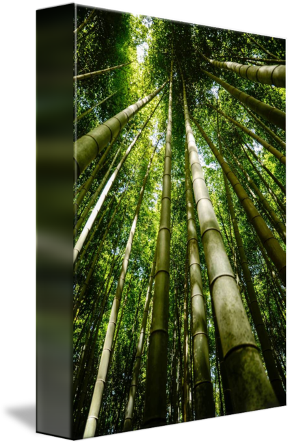 Forrest drawing perspective. Bamboo forest green trees