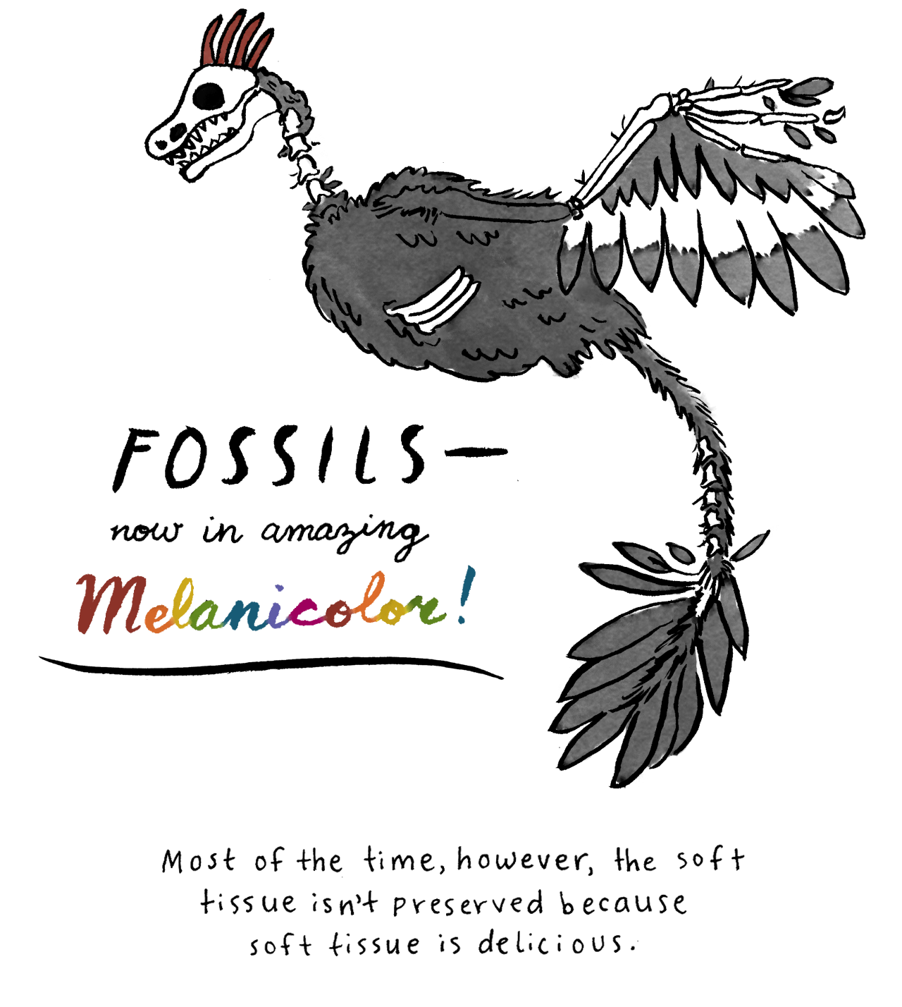 Fossil clipart anthropology. Anthropological curiosities