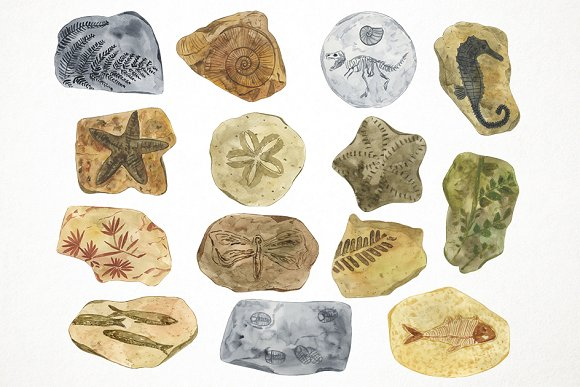 Watercolor fossils illustrations creative. Fossil clipart artifact clip art black and white library