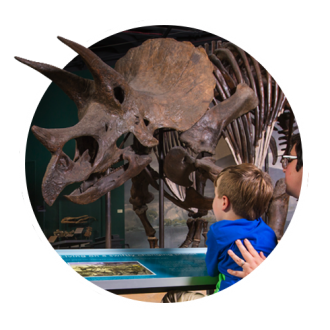 Science museum of minnesota. Fossil clipart artifact picture freeuse